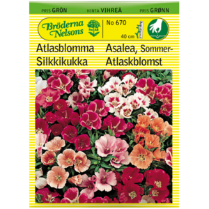 Atlasblomma Mix