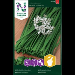 |Kinesisk Gräslök Garlic oriental