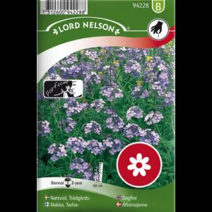 Trädgårdsnattviol|Trädgårdsnattviol