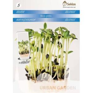 Micro Greens Solros