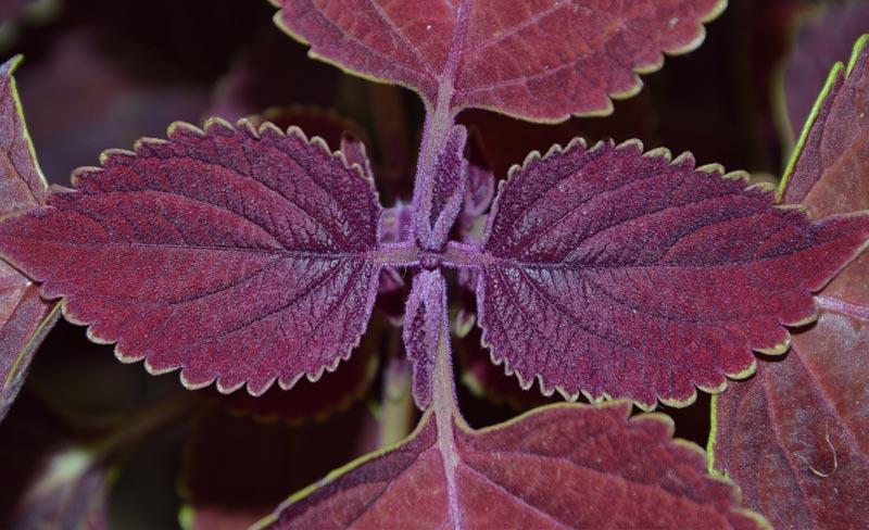 Palettblad