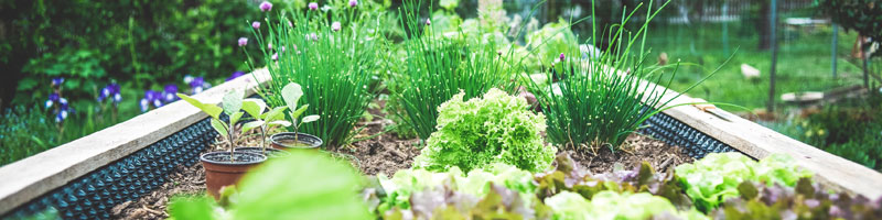 Grönsaksfröer