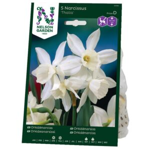 Orkidénarciss Thalia